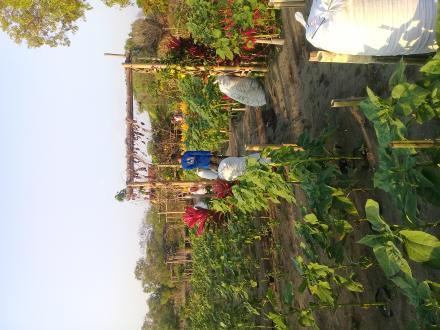 Wisata Kebun Bunga Gadingsari